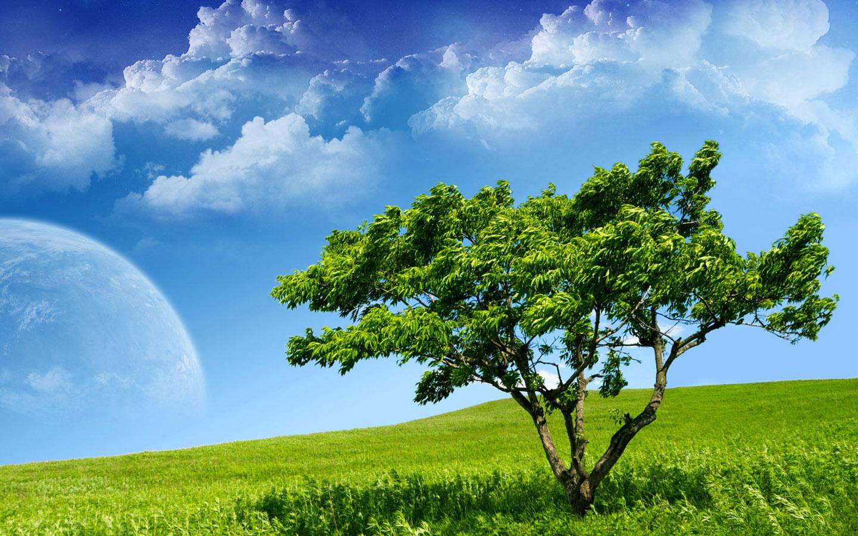 Fakta-fakta menarik tentang Pohon